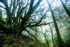 Análisis pelicula el libro de la selva